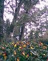 Flores rojas y amarillas, y árboles detrás